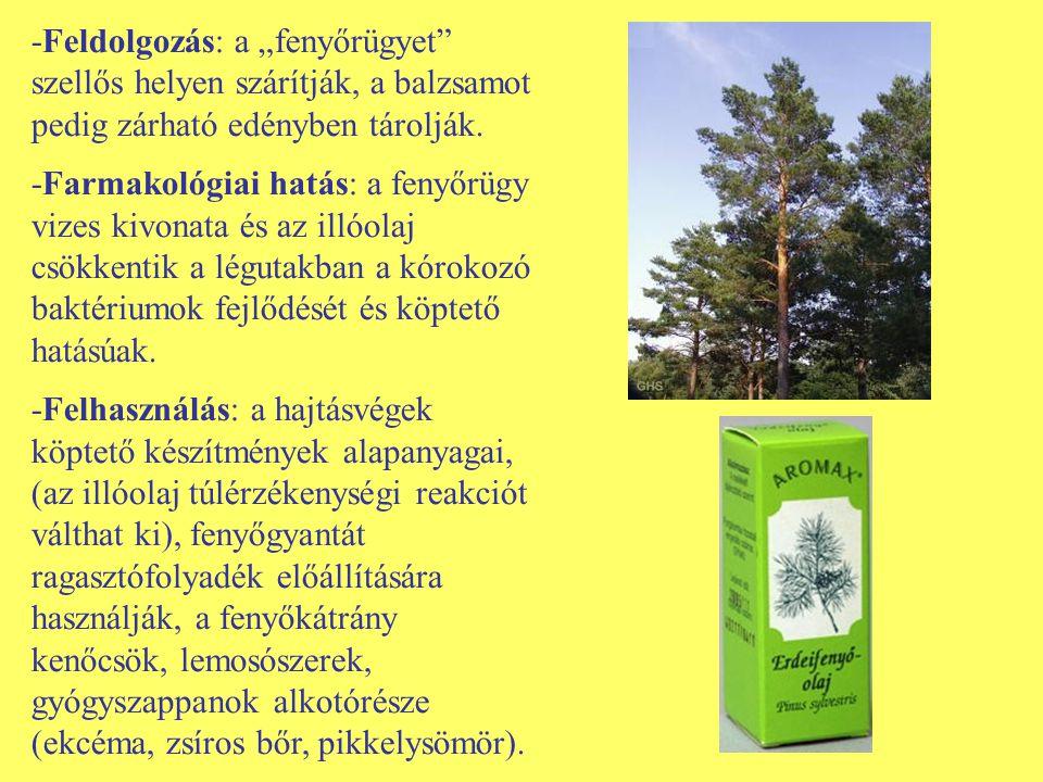 Wikipédia:Növények műhelye/Gyógynövény munkacsoport – Wikipédia
